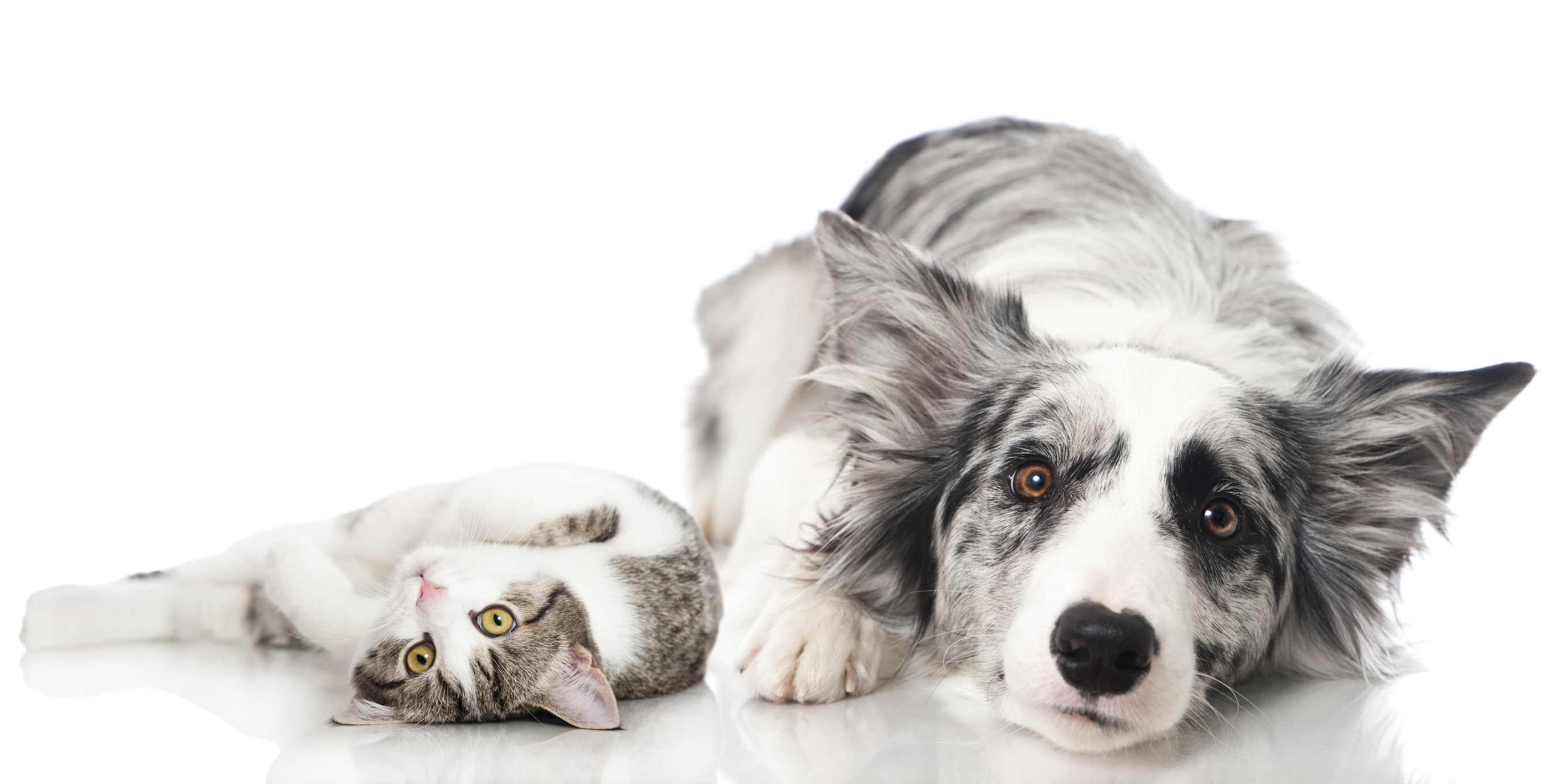 Acupuncture<br>For</p>Dogs & Cats